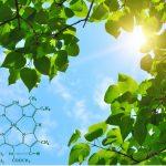 В каких клетках происходит фотосинтез?