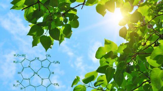 В каких клетках происходит фотосинтез