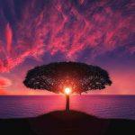 В чем красота природы? Сочинение и пояснение