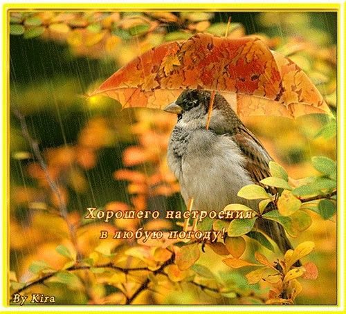 Доброе утро в плохую погоду - подборка открыток (12)