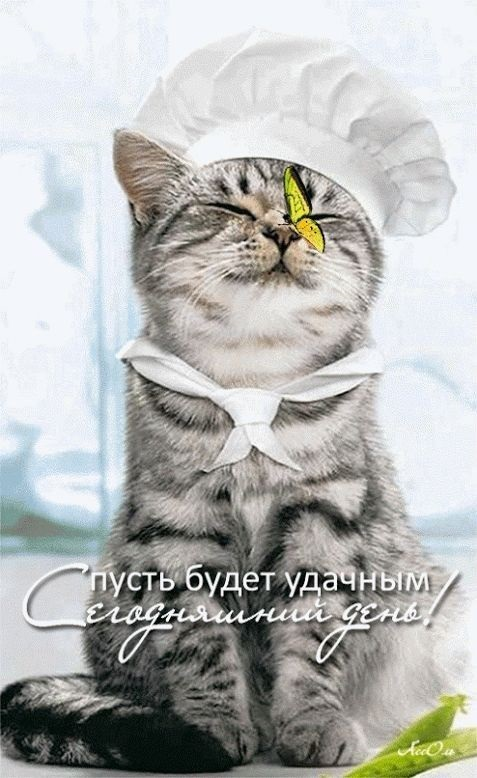Доброе утро мой ангел картинки (11)