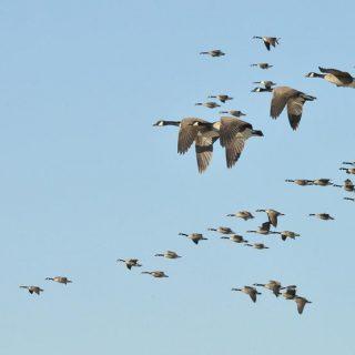 Какие птицы улетают от нас осенью и остаются на зиму