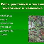 Какова роль растений в природе и жизни человека?