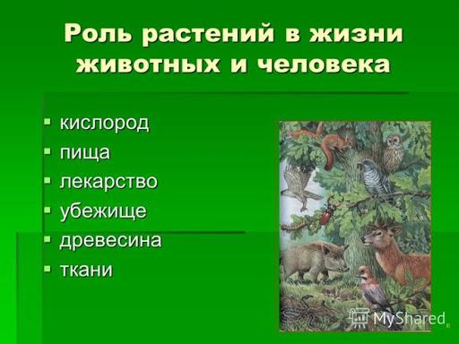 Какова роль растений в природе и жизни человека