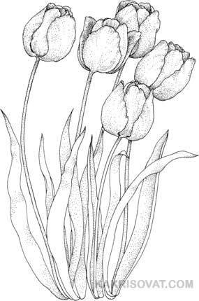 Как нарисовать красивые цветы фотоподборка (1)