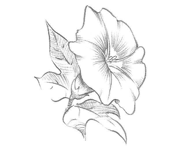 Как нарисовать красивые цветы фотоподборка (13)