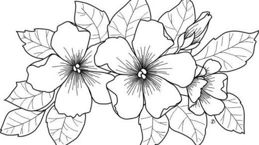 Как нарисовать красивые цветы фотоподборка (19)