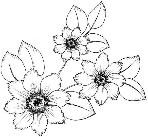 Как нарисовать красивые цветы фотоподборка (21)