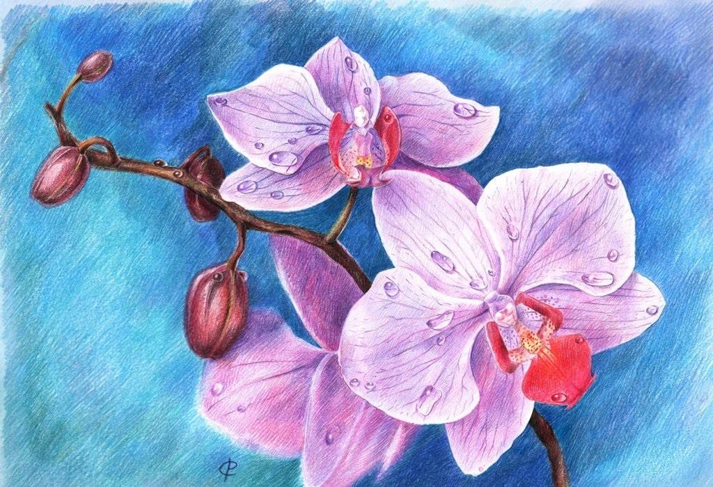Как нарисовать красивые цветы фотоподборка (23)