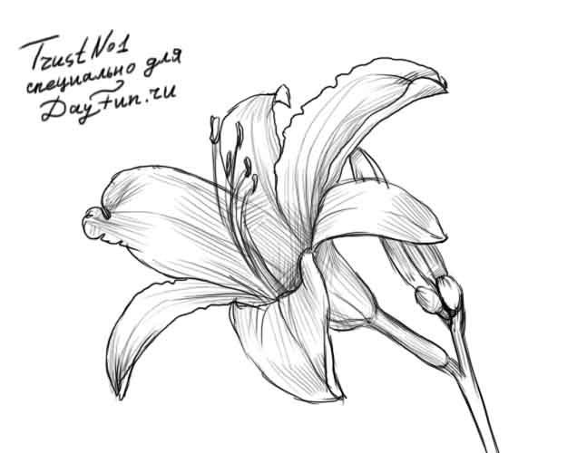 Как нарисовать красивые цветы фотоподборка (24)