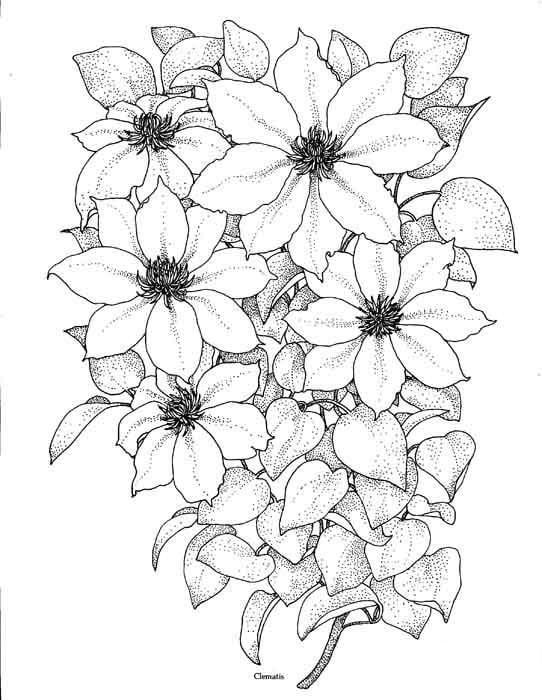 Как нарисовать красивые цветы фотоподборка (6)