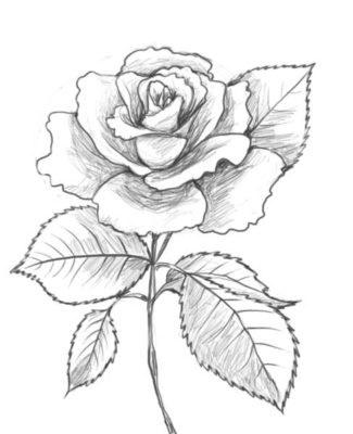 Как нарисовать красивые цветы фотоподборка (8)