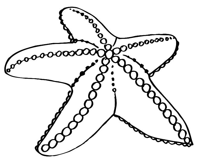 Картинка морская звезда для детей (10)