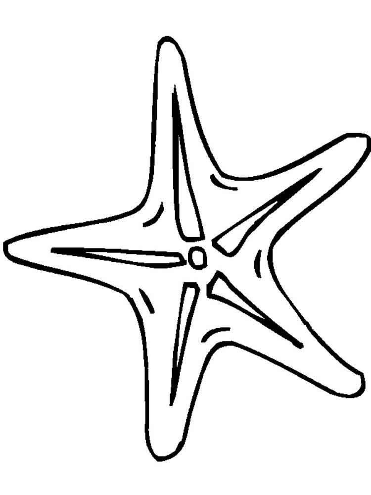 Картинка морская звезда для детей (14)