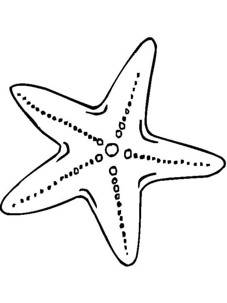 Картинка морская звезда для детей (15)