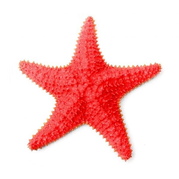 Картинка морская звезда для детей (16)