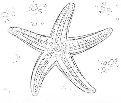 Картинка морская звезда для детей (17)