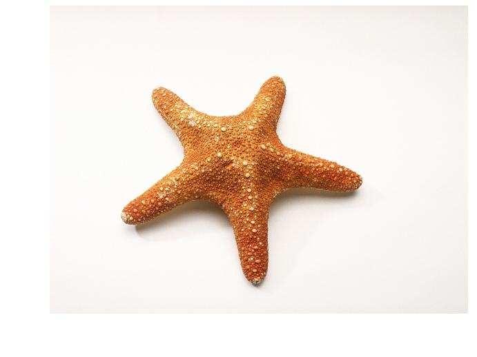 Картинка морская звезда для детей (23)