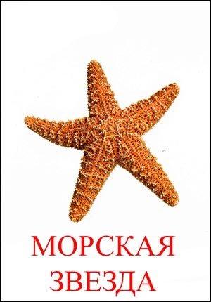 Картинка морская звезда для детей (24)