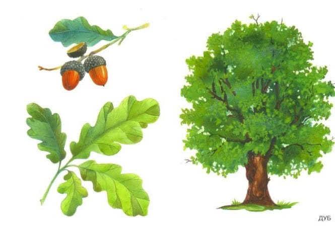 Картинка ствол дерева для детей (2)