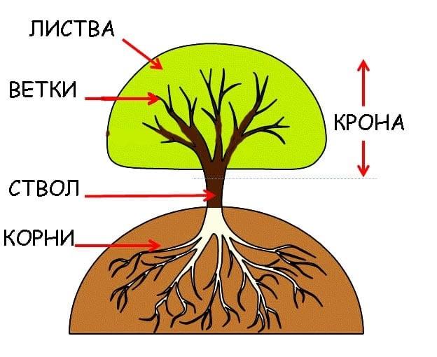 Картинка ствол дерева для детей (25)
