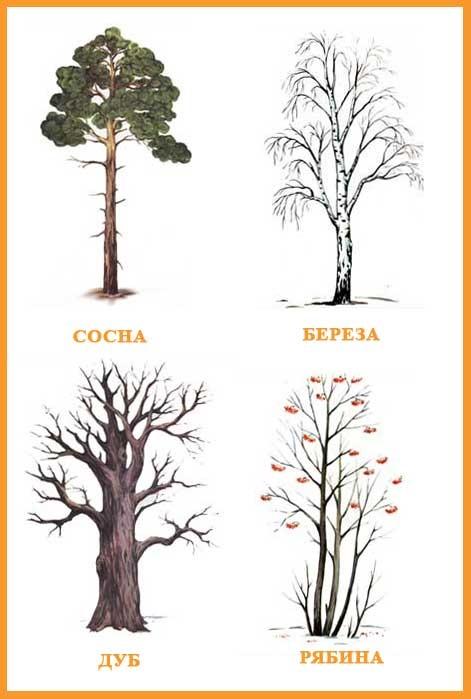 Картинка ствол дерева для детей (27)