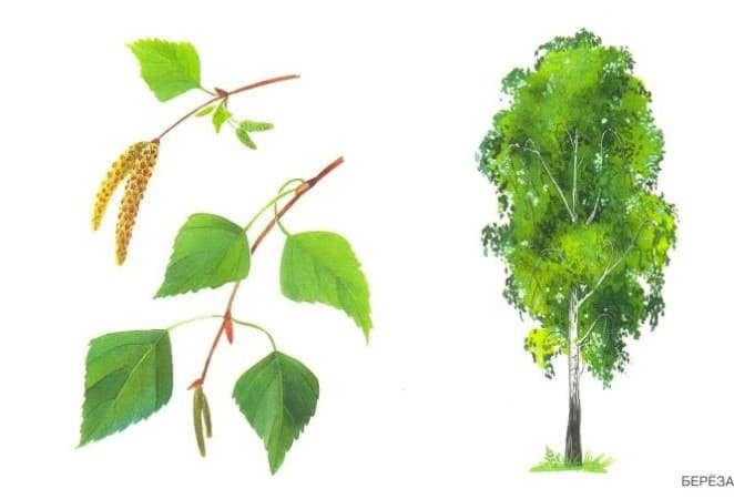 Картинка ствол дерева для детей (9)