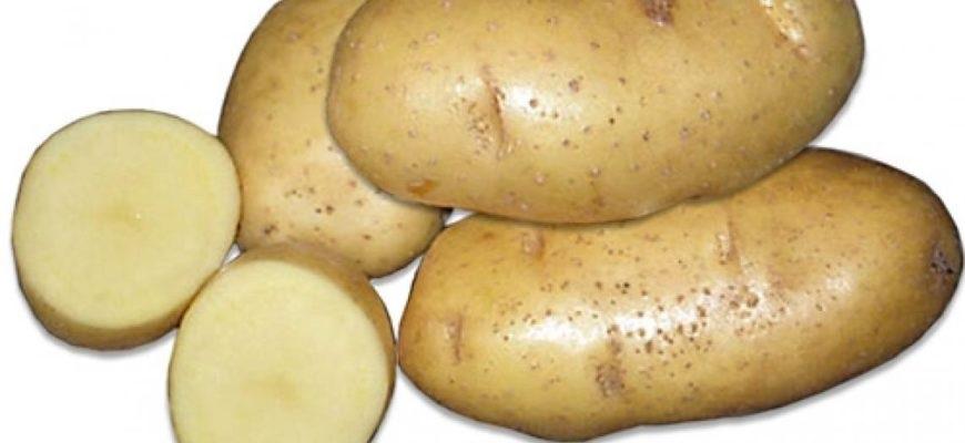 Картинки картошки для детей цветные (15)