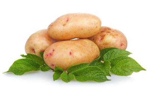 Картинки картошки для детей цветные (2)