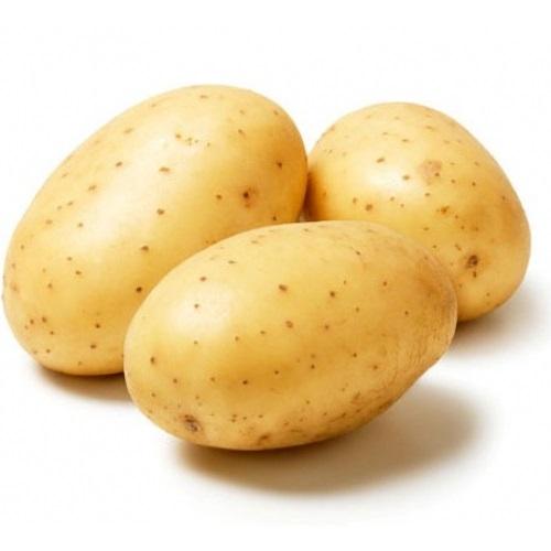 Картинки картошки для детей цветные (5)