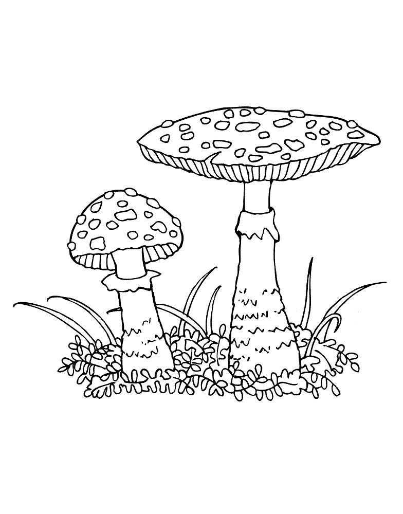 Картинки раскраски мухомора для детей (14)