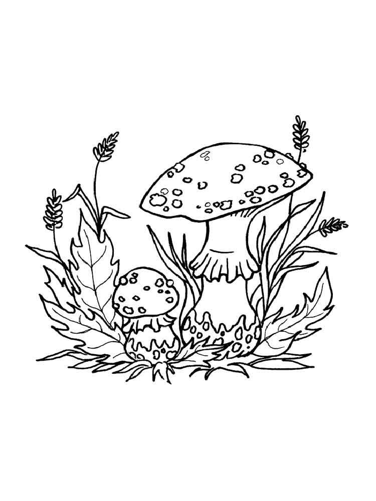 Картинки раскраски мухомора для детей (16)