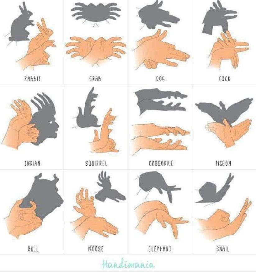 Картинки тени животных для детей (10)