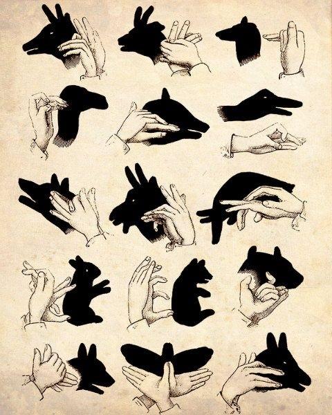 Картинки тени животных для детей (11)