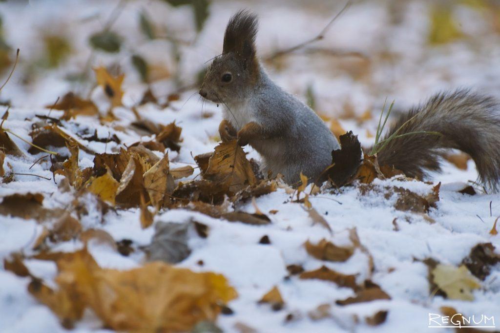 Красивые картинки на рабочий первый снег (15)