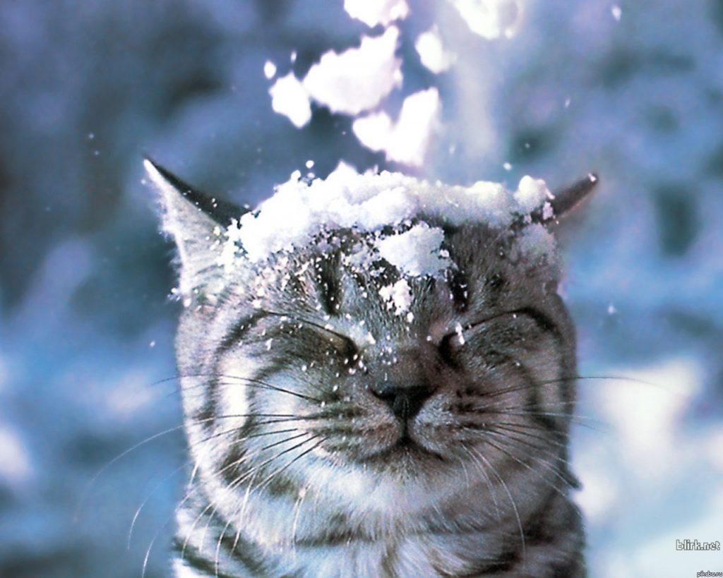 Красивые картинки на рабочий первый снег (18)