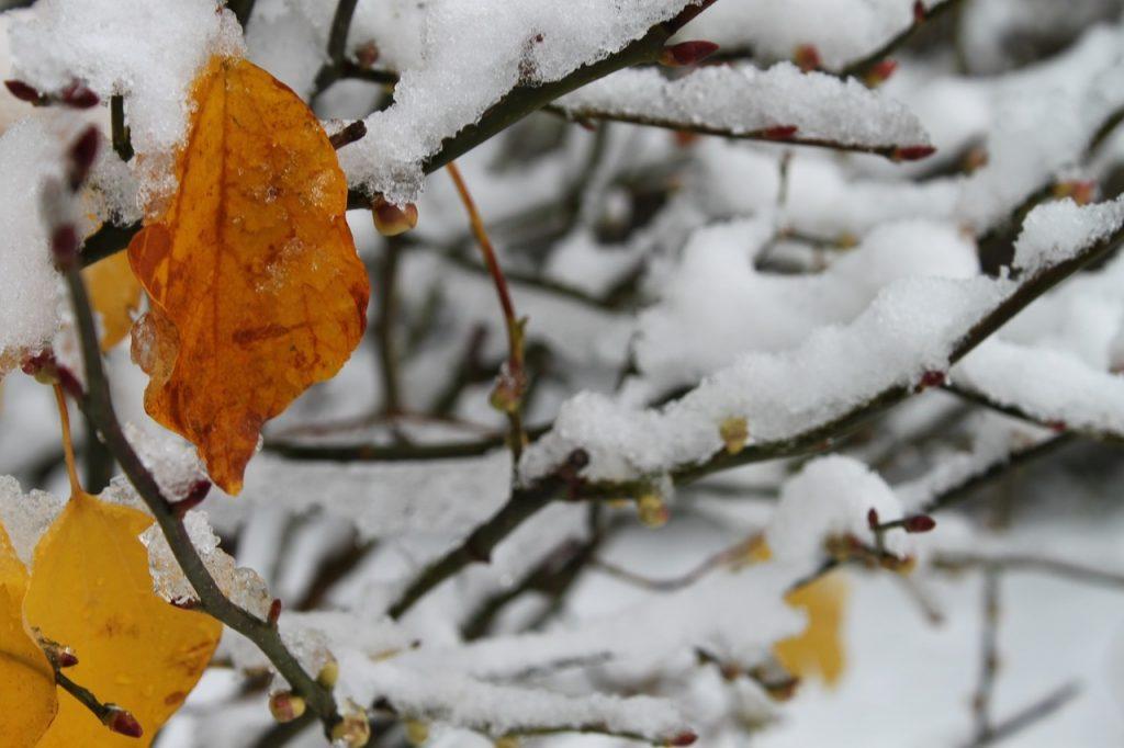 Красивые картинки на рабочий первый снег (19)