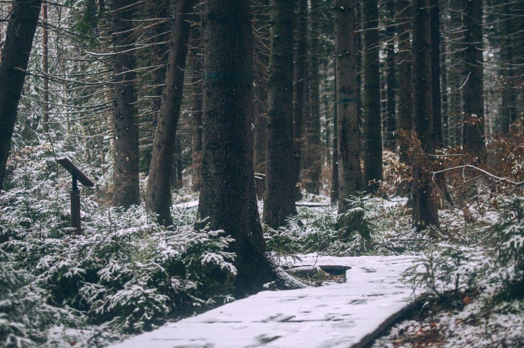 Красивые картинки на рабочий первый снег (3)