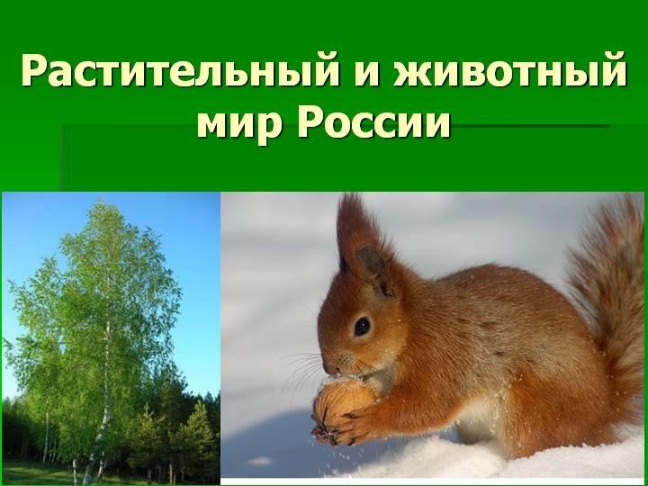 Красивые картинки на тему животный мир (1)