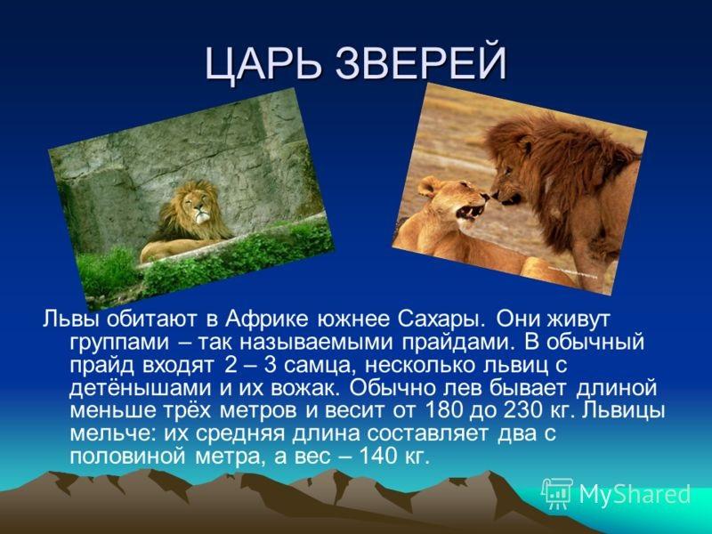 Красивые картинки на тему животный мир (10)
