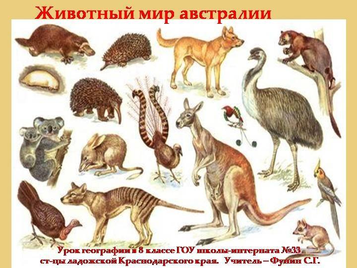 Красивые картинки на тему животный мир (11)