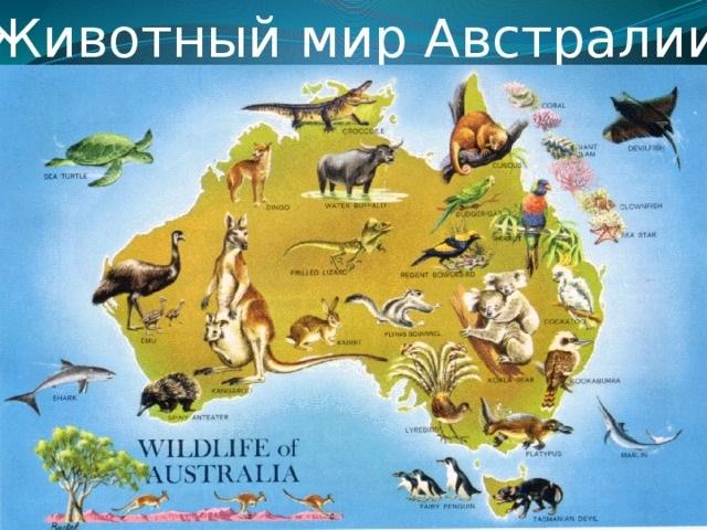 Красивые картинки на тему животный мир (13)