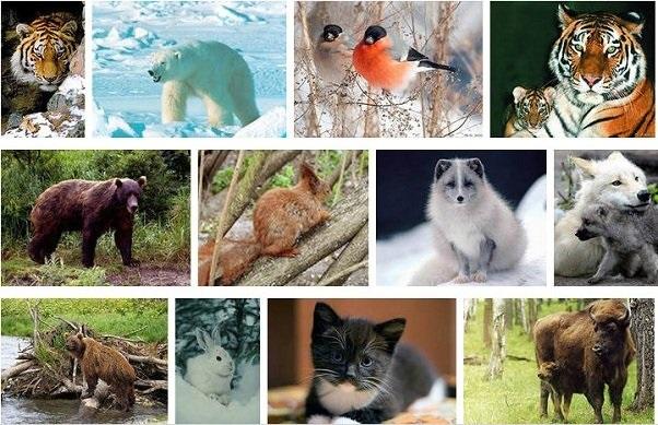 Красивые картинки на тему животный мир (14)