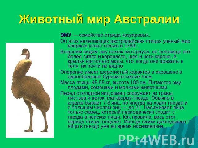 Красивые картинки на тему животный мир (15)