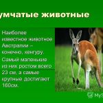 Красивые картинки на тему животный мир