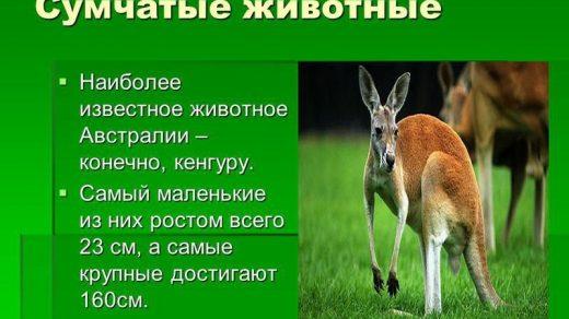 Красивые картинки на тему животный мир (16)