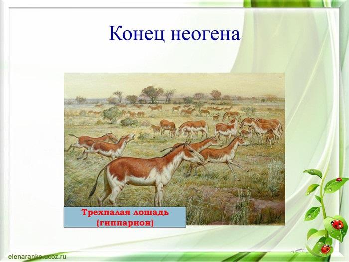 Красивые картинки на тему животный мир (17)