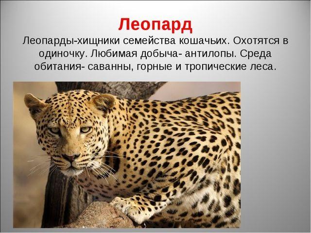 Красивые картинки на тему животный мир (18)