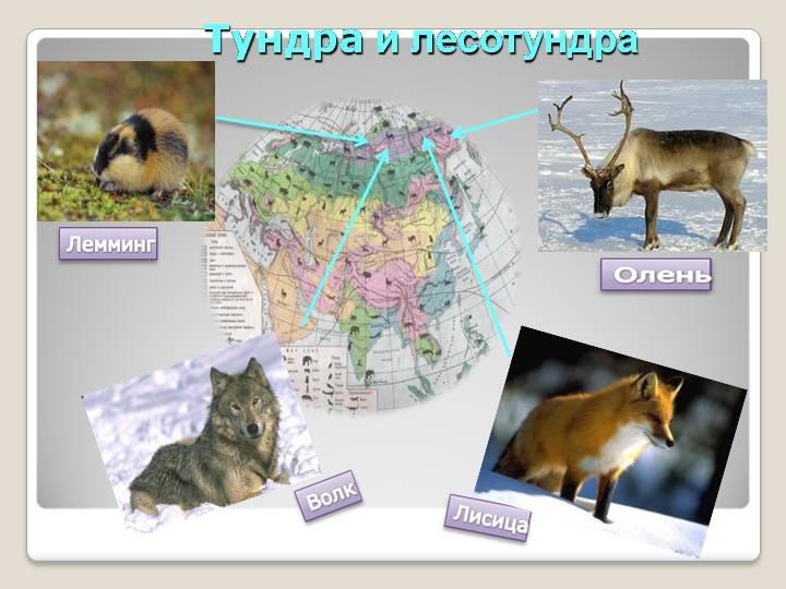 Красивые картинки на тему животный мир (2)