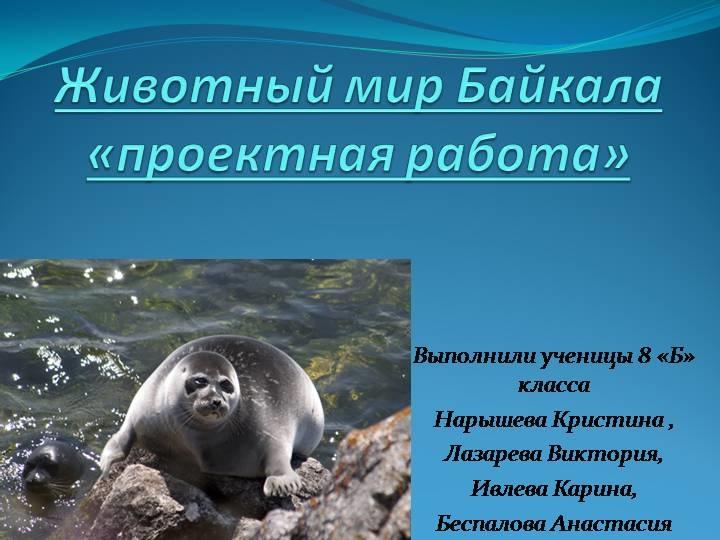 Красивые картинки на тему животный мир (20)